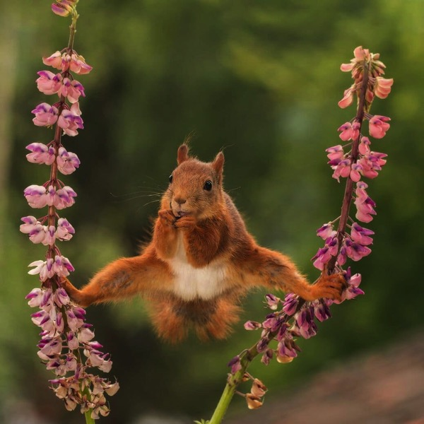 Comedy wildlife photography awards mid way entries 4