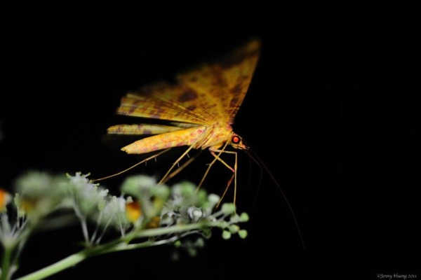 Wildfires disrupt moth flower relationships increasing risk of extinctions
