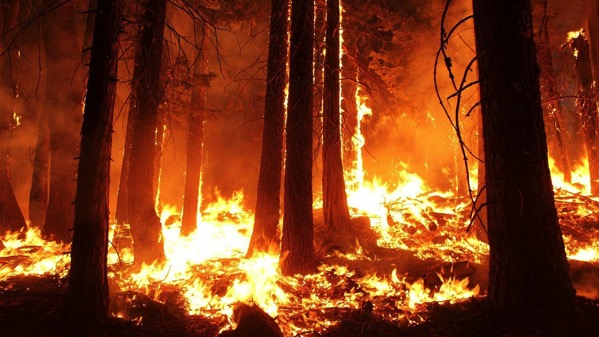 Wildfire 1105209 1280 2